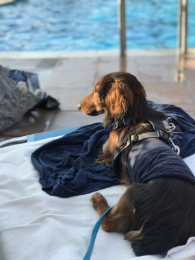 Eddie am Pool von Louiza